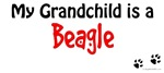Beagle Grandchild