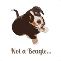 Not a Beagle - Entlebucher Mountain Dog