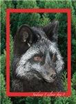 Silver Fox Cards