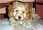 Puppy eyes!