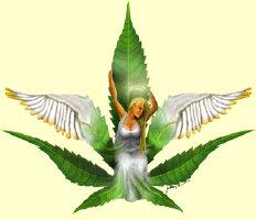 Sativa Goddess (Medical marijuana)