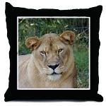 Sarabi the Barbary Lion Pillows