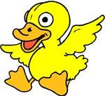 Baby Ducks, Ducks