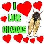 I Love Cicadas