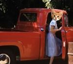 Red truck Kitten