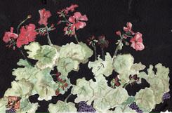 Arlene's Geraniums