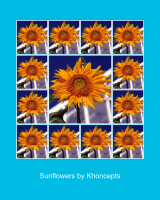 Colorful Sunflower Posters by Celeste Sheffey
