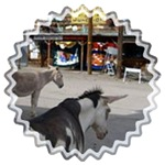 Oatman Arizona Burros