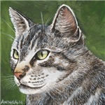CATS - TABBY CAT