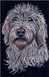 DOGS - LABRADOODLE 2