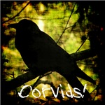 Corvids! (Crows and Ravens)