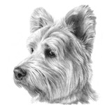 West Highland Terrier (Westie)