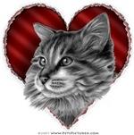Maine Coon Cat Valentine
