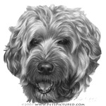 Bailey, Soft-Coated Wheaten Terrier