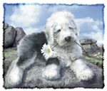 Old English Sheepdog on the rocks