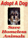 Adopt A Dog Save Homeless Animals