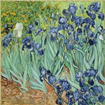 Irisses by van gogh
