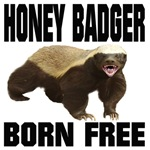 Honey Badger Born Free