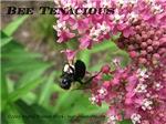 Bee Tenacious