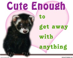Cute Enough Ferret