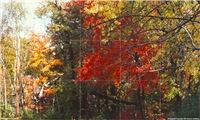 New England Foliage Tile Mural