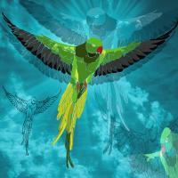 4 Elements: Air-Parrot