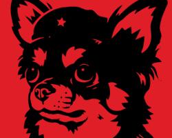 Viva la Chihuahua!