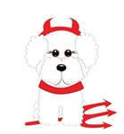 Bichon Frise Devil Dog