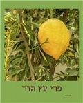 Sukkot Esrog Tree