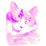 Faded Purple Cat