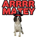 Pirate English Springer Spaniel