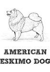 American Eskimo Dog Illustration
