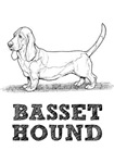 Basset Hound Illustration