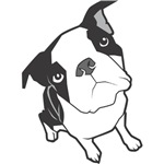 Boston Terrier Sketch