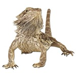 Bearded Dragon T-Shirts