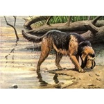 Otterhound Art