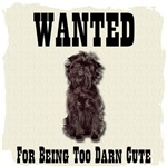 Affenpinscher Wanted Poster