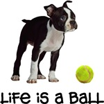 Boston Terrier Life