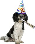 Havanese Birthday T-Shirts