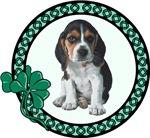 Irish Beagle