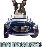 LOL Boston Terrier