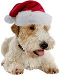 Wire Fox Terrier Santa