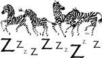 Zebra Z's