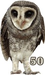 Wise Old Owl 50th t-shirts, bags, gifts!