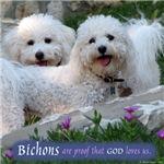 Bichons are...