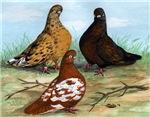 Shortfaced Tumbler Pigeons
