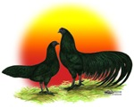 Sumatra Rooster and Hen
