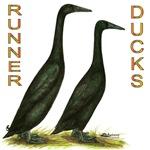 Black Runners