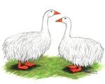 Sebastopol Goose and Gander