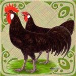 Black Minorca Chickens